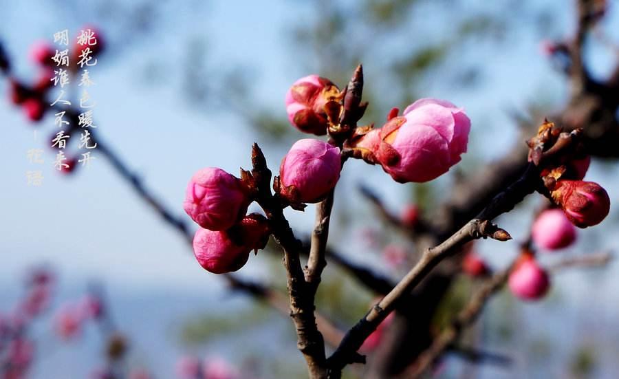 三月桃花红诗句6篇